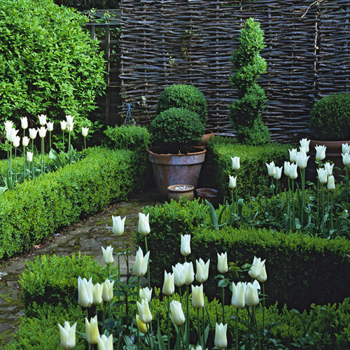 90' x 28' town gdn. Patio edged in Iris 'White Superior', Papaver orientale 'Lilac Girl' & Rosa 'Francois Juranville' along fence.